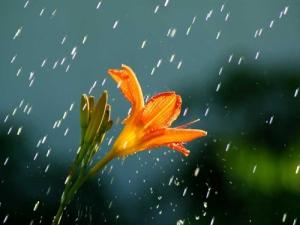 summer_rain_2